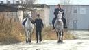 Апатитские казаки победили в областной интеллектуальной викторине
