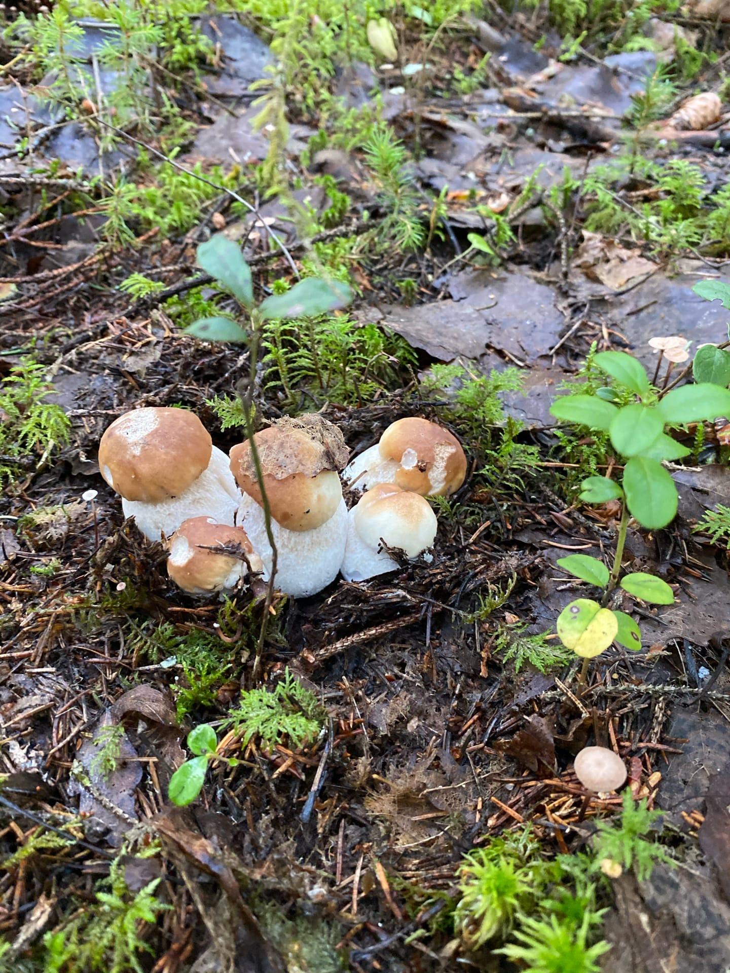 В лес по грибы.