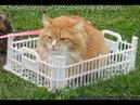 Веселые картинки. Приколы про котов и кошек.