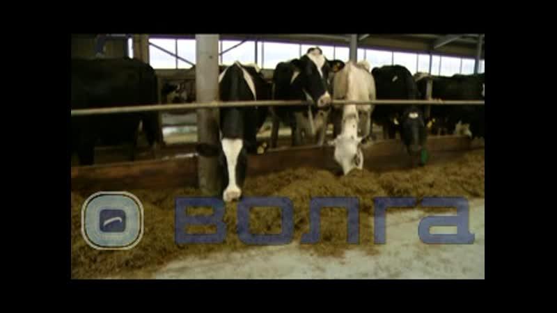 Бережливые технологии превращают молочную ферму в животноводческий комплекс будущего