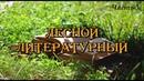 Театр-студия Арлекин - Лесной литературный. Часть 3