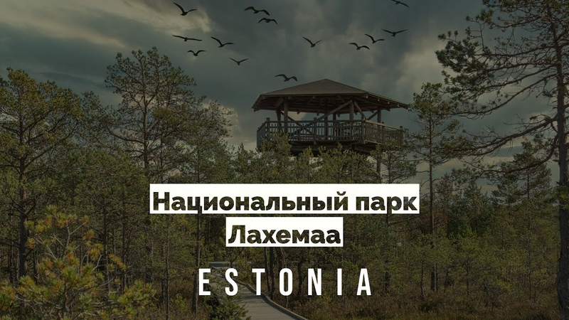 Лахемаа Болото Эстония Национальный парк Лахемаа Болото ВИРУ Эстония