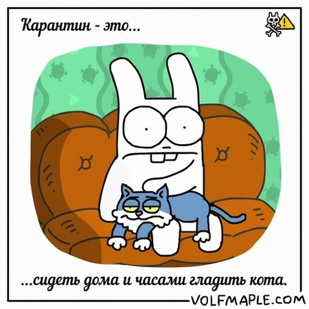Rabbit Travel - Quarantine is... to pet your cat for hours
