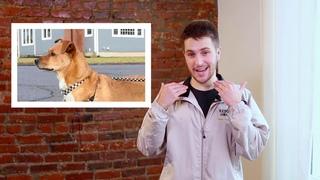 Изучение языка тела приёмной собаки / Learning Your Foster Dog's Body Language