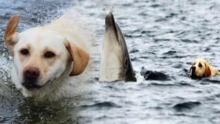 Лабрадор каждый день бежит на пристань, чтобы поплавать со своими другом дельфином!