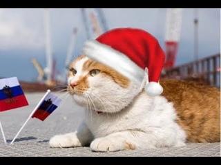 😻💛🌺Кот Мостик поздравляет с Новым годом!))😻💛🌺 Крымский мост.Кот моста.
