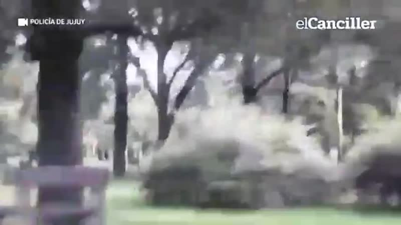 Аргентина ловля карантинщиков