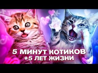Смешные видео. Собаки и котики. Прикольные котята и щенки. Смешные животные на канале Funny Video.