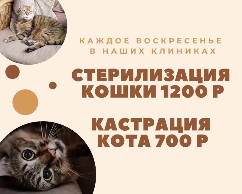Льготная кастрация и стерилизация кошек и котов