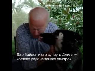 Собака Байдена окажется первой из приюта в Белом доме