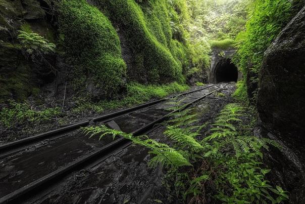Заброшенный сияющий туннель Хеленсбург, Астралия Затопленные железнодорожные пути ведут к заброшенному проходу, почти затерянному в каскаде лиственной растительности. Внутри темный, сырой