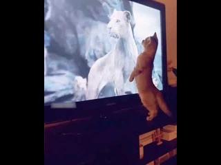 Кот испугался льва