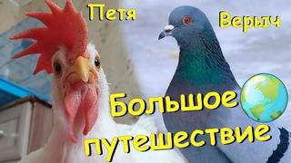 Большое путешествие петушка Пети и голубя Верыча. A big journey of the chick and the pigeon