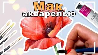 WATERCOLOR SPEEDPAINT   Акварельный мак   Спидпейнт
