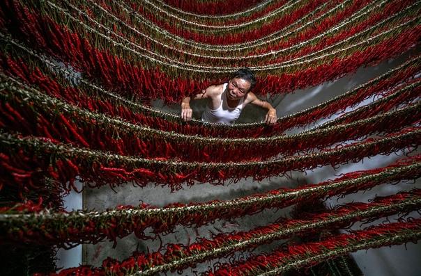 Крестьянин сушит перец чили, развесив его на веревках, Гуйчжоу, Китай