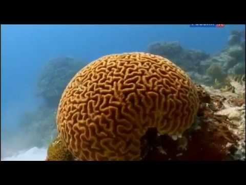 моря жизни BBC