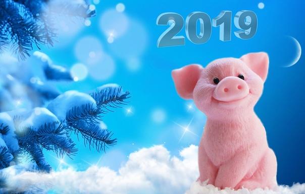 Скачать Бесплатно Живые Обои Новогодних Хрюшек