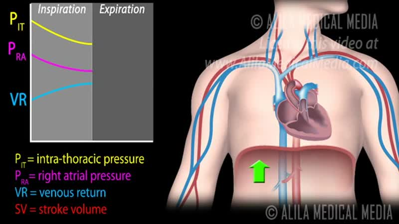 17 how respiratory pump affects venous return ★ animation