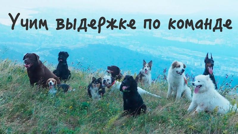 Как научить собаку выдержке по команде? Сидеть лежать стоять место ждать? Что говорить?