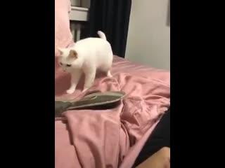 кот бит боксер