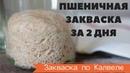 САМАЯ БЫСТРАЯ ПШЕНИЧНАЯ ЗАКВАСКА по Калвелю за 2 5 дня или 60 часов РЕЦЕПТ РАЙМОНДА КАЛВЕЛЯ