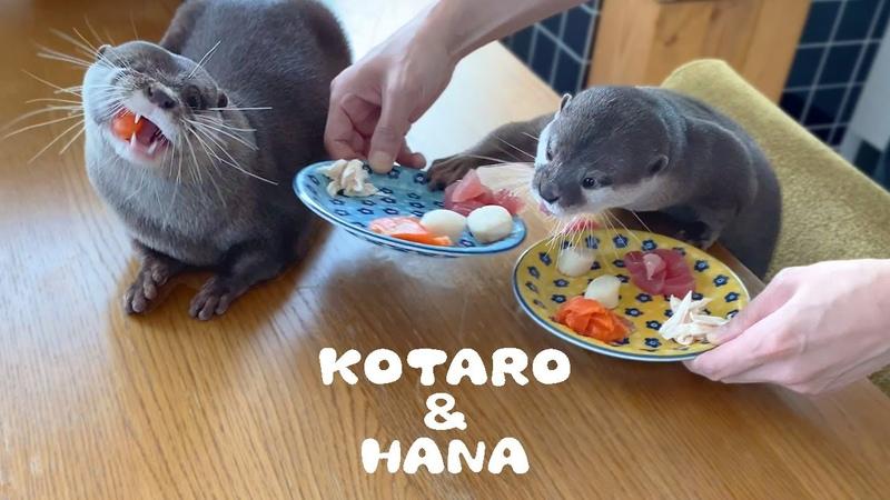 カワウソコタローとハナ 贅沢な朝ごはんいただきます! Otter Kotaro Hana Lovely Breakfast