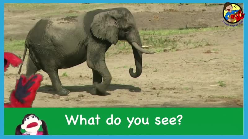 What Do You See Song with Matt Describing Wild Animals I See a Big Elephant Learn English