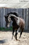 ♥♥♥The  Best Horses♥♥♥