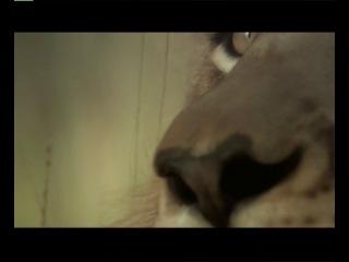 Укротитель по вызову Резня в улье Остров орангутанов