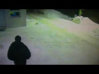 мужик покозал дорогу кошке