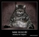 Фотоальбом Владимира Биккинина