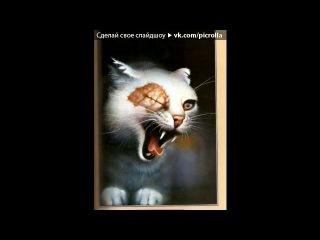 Со стены Коты Воители Племя Сверкающих Вод под музыку коты воители и мы не встретимся с тобой бич и верескоглазка Picrolla
