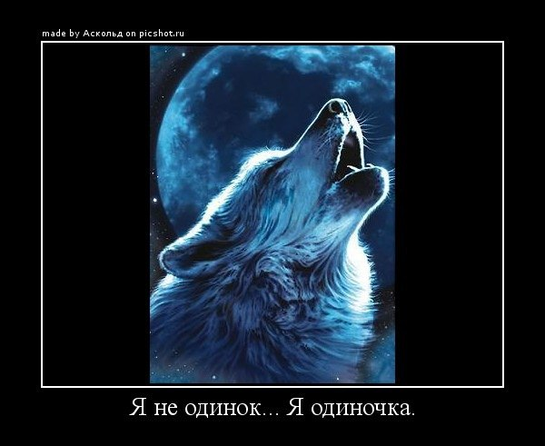 Одинокий волк прикольная картинка
