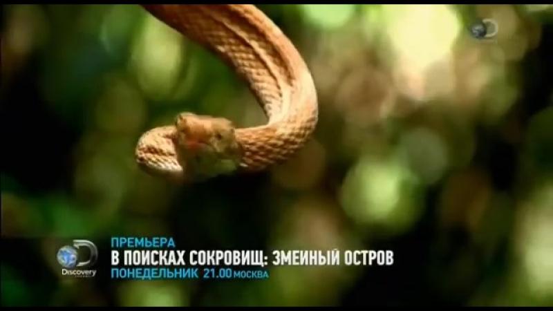 В поисках сокровищ змеиный остров. Discovery