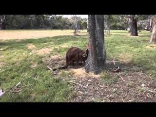 Animal sex - Animals Mating - Funny animals - Hot animals mating crazy videos Part 4