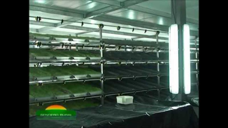 Sistema de Producción Intensiva de Forraje Verde Hidropónico en espacios reducidos Hidroforrajes