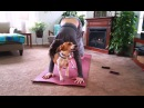 Cats and Dogs Interrupting Yoga Compilation || CFS
