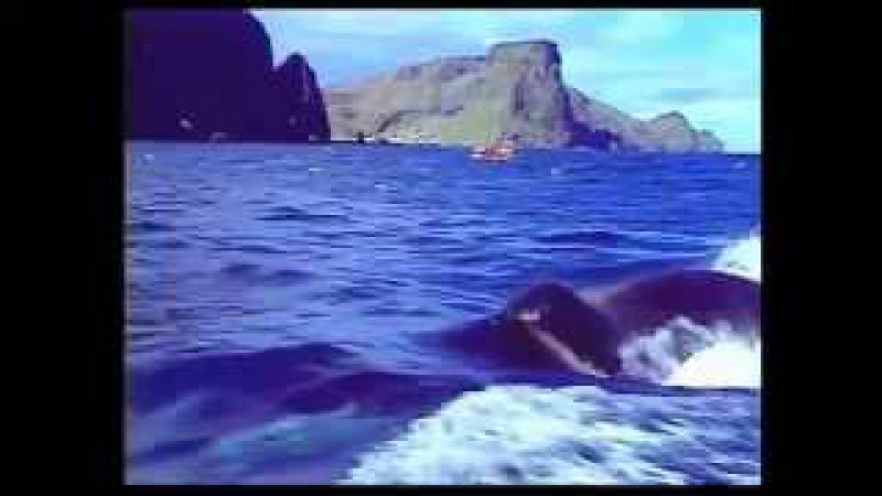 Keiko Iceland to Iceland A Film by Michael Harris for Craig McCaw and Keiko Project