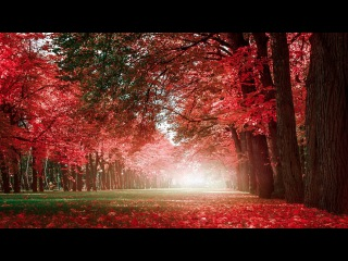 Beautiful Relaxing Music - Romantic Music with Piano, Cello, Guitar & Violin | Autumn Colors