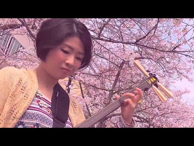 Японские девушки играют под сакурой на Сямисэне