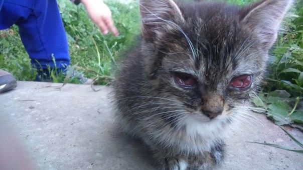 водяная картинки избитых кошек то