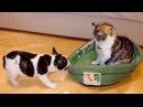 Уморные Коты ХАХ