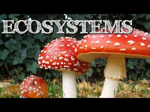 Understanding Ecosystems for Kids Producers Consumers Decomposers FreeSchool