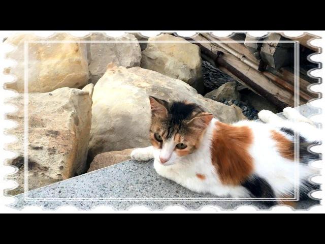 Александр Щербина Куда пропала кошка игравгорода ащ