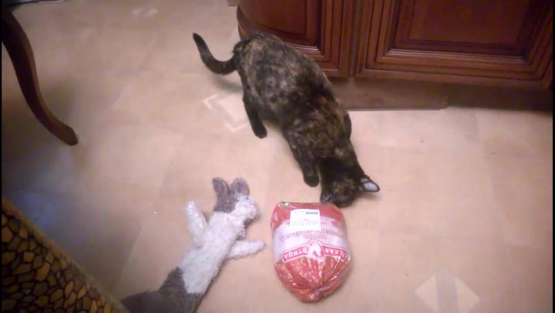 Юппи отжигает Посмотрите видео улыбнитесь Спасибо котородителям за кошкино счастье