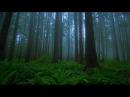 Величественная природа Majestic Nature 1 Леса Forests Смотрите и наслаждайтесь