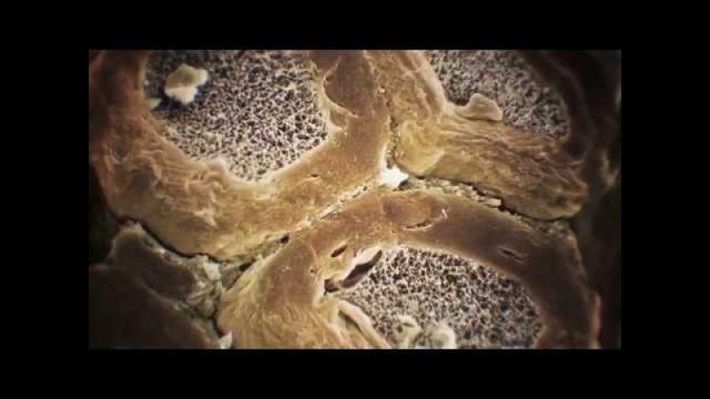 Тело человека Грани возможного 3 часть Осязание