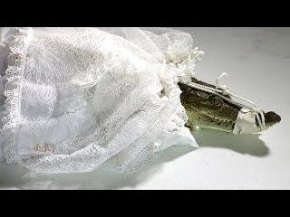 Экзотическая свадьба: мексиканский мэр женился на крокодиле (новости)
