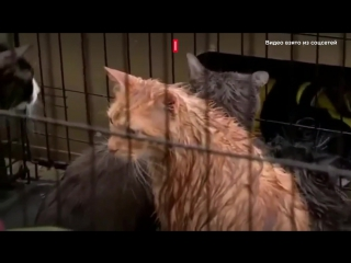 Сотни животных спасают в затопленных городах Техаса