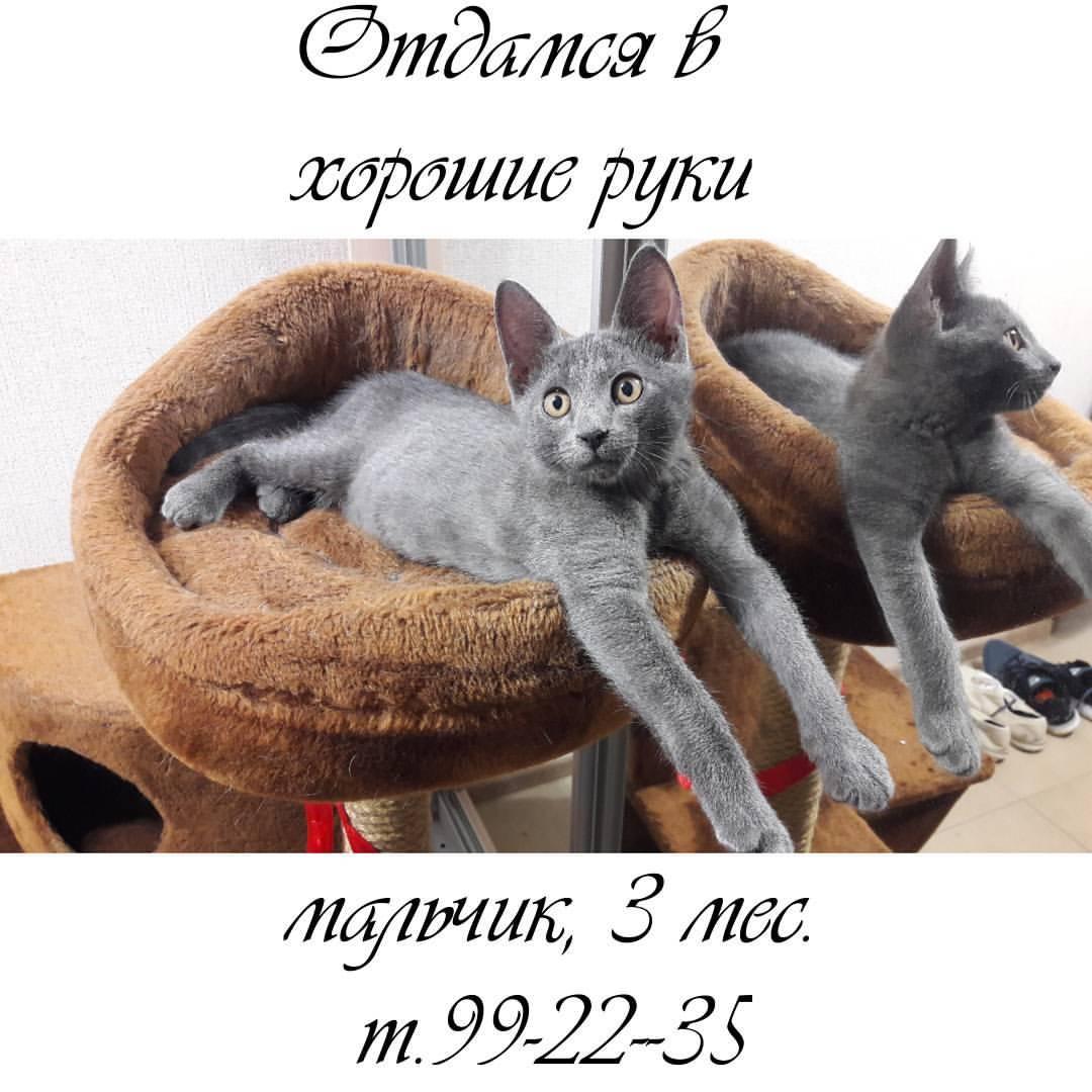 Бар «АПРИОРИ» - Вконтакте